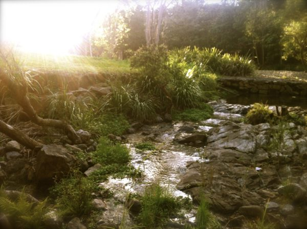 creek in upper brookfield